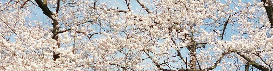 スライド 桜